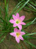цветок цветения предпосылки цветет белизна неба Стоковое Фото