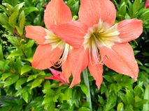 цветок цветения предпосылки цветет белизна неба стоковое фото rf