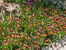 Цветок цветения пурпура и orage фиолетовый весной Волшебный весенний сезон стоковая фотография