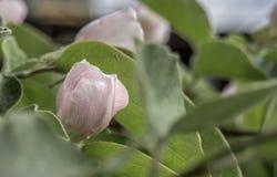 Цветок цветения Стоковая Фотография
