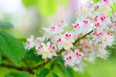 цветок цветения Стоковая Фотография RF