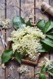 Цветок цветения Elderflower в деревянной предпосылке Съестные цветки elderberry добавляют вкус и ароматность к питью и десерту стоковое фото