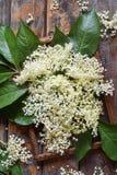 Цветок цветения Elderflower в деревянной предпосылке Съестные цветки elderberry добавляют вкус и ароматность к питью и десерту стоковая фотография rf