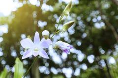 цветок цветет phalaenopsis орхидей орхидеи Стоковые Фото