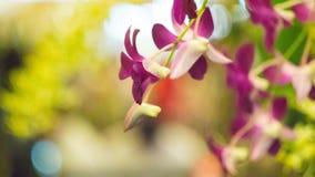 цветок цветет phalaenopsis орхидей орхидеи Стоковая Фотография