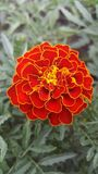 Цветок 2 цветов стоковые изображения rf