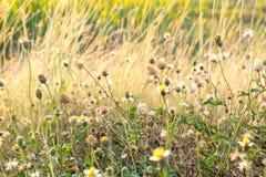 Цветок/цветок травы Стоковое Изображение