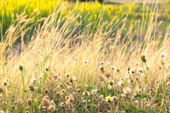 Цветок/цветок травы Стоковое Фото