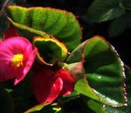 Цветок; цветорасположение стоковая фотография