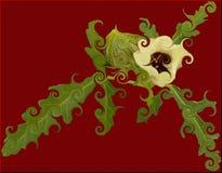 Цветок часа Стоковая Фотография RF