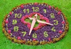 цветок часов стоковые изображения