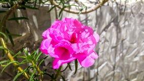 Цветок часов ` 11 o Стоковые Фотографии RF