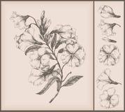цветок чертежа иллюстрация штока