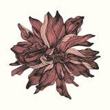 Цветок чертеж вручает ее нижнее белье утра вверх по теплым детенышам женщины шикарный вектор иллюстрации Стоковое Фото