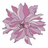Цветок чертеж вручает ее нижнее белье утра вверх по теплым детенышам женщины также вектор иллюстрации притяжки corel Стоковая Фотография RF