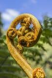 Цветок чужеземца Стоковая Фотография