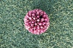 цветок шарика стоковое фото rf
