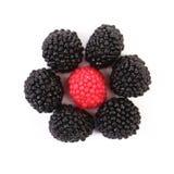 Цветок шариков покрашенных jujube Стоковые Изображения RF