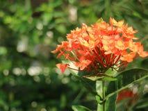 Цветок шипа Стоковые Фото
