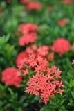 Цветок шипа Стоковое Изображение RF