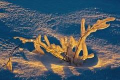 Цветок льда на поле снега Стоковое Изображение RF