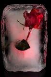 Цветок льда Стоковая Фотография RF