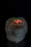 Цветок льда Стоковое Изображение