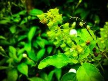 Цветок это реально охлаждает и стоковое фото rf