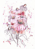 Цветок эхинацеи на предпосылке рамки Стоковое Фото