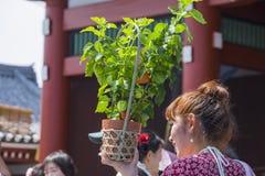 Цветок японского фонарика Стоковая Фотография RF