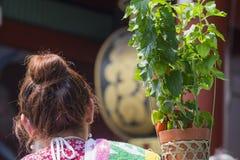 Цветок японского фонарика Стоковые Фотографии RF