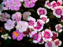 цветок 01 Стоковое Изображение RF