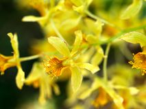 цветок 02 Стоковое Изображение RF