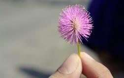 Цветок 01 Стоковые Фотографии RF