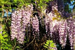 Цветок 015 Стоковое фото RF