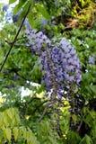 Цветок 009 Стоковое Изображение RF