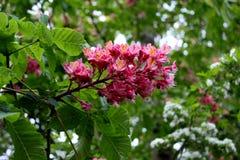 Цветок 005 Стоковая Фотография