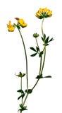 цветок 2 одичалый Стоковые Изображения RF