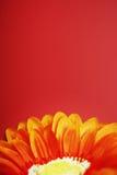 цветок 2 стоковая фотография