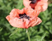 цветок Стоковая Фотография