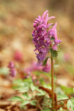 Цветок. Стоковое Изображение RF