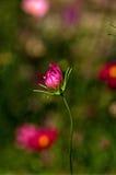 Цветок 5 Стоковые Изображения RF