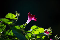 цветок Стоковое Изображение