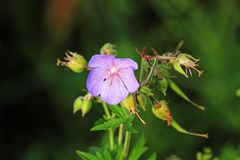 Цветок Стоковая Фотография RF