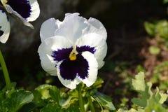 Цветок 6 Стоковое фото RF