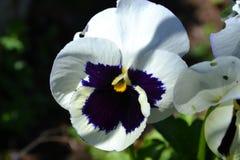 цветок 5 Стоковая Фотография RF