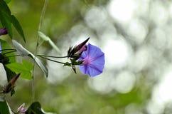 Цветок Стоковые Фото