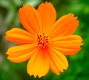 цветок 7 Стоковая Фотография