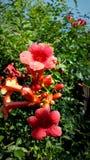 Цветок 2 Стоковые Фотографии RF