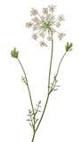 цветок 8 одичалый Стоковые Фотографии RF